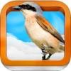 Atlas ptáků pro děti